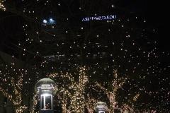 Lichterketten bis in die Baumspitze