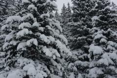 Überall Schnee