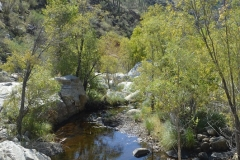 Kleiner Teich