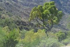 So grün ist es in der Wüste!!!